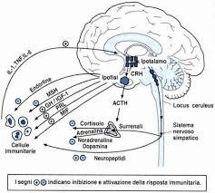 le nostre emozioni influenzano la produzione di ormoni che regolano a loro volta le difese immunitarie